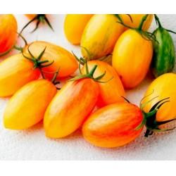 ARTISAN BLUSH TIGER Tomatensamen