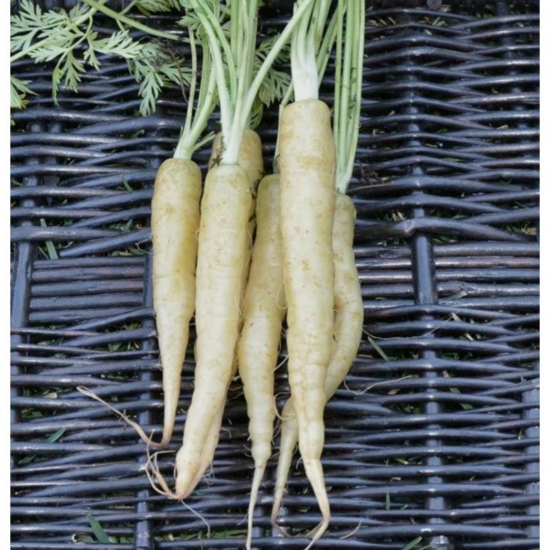 Graines de carotte blanche LUNAR WHITE
