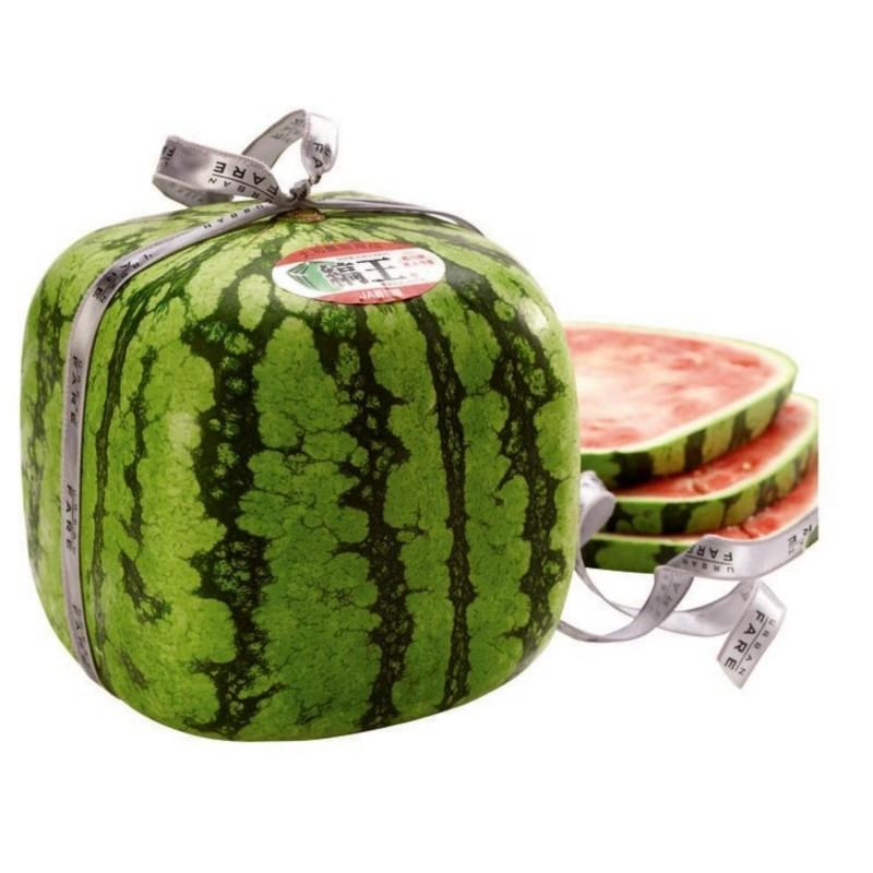 Würfel Wassermelone Samen