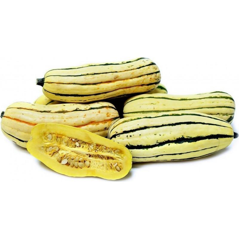 Zucchini Delicata Bush Kürbis Samen