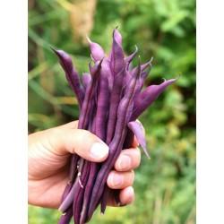 Σπόροι φασολιών Cosse Violet