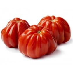 Sementes de Tomate italiano CUOR DI BUE