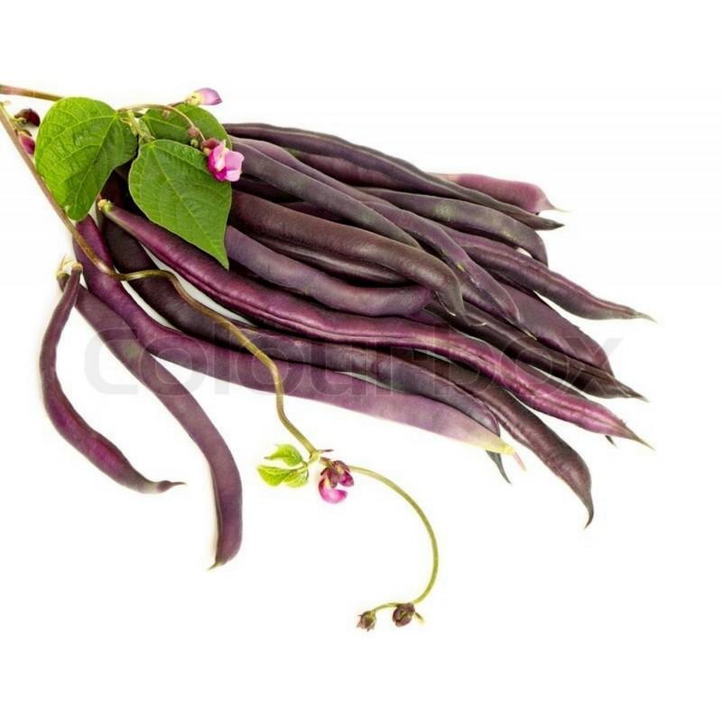Runner Bean Cosse Violet Seeds