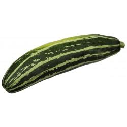 Zucchini Samen MARROW LONG GREEN BUSH