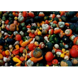 Semi di zucchette decorative in miscuglio