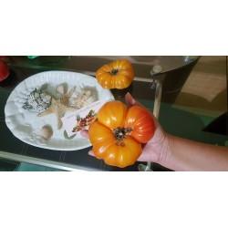 Tomatensamen Pineapple Golden  Ananastomate Fleischtomate