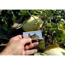 SNOW LEOPARD Melonen Samen - SEHR SELTEN