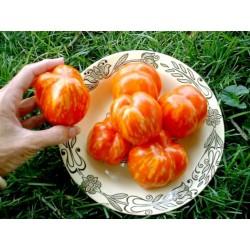 Striped Stuffer Tomato Seeds