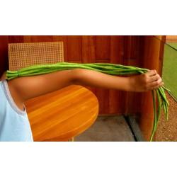 Meter-Bohne Yard Long Bohnen Samen