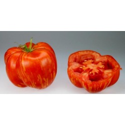 Graines de Tomate STRIPED STUFFER