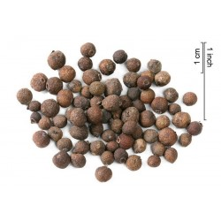 Pimenta dioica Allspice Seeds Jamaican Pepper Spice Ornamental Container Plant