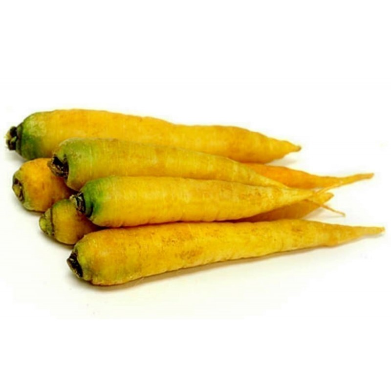 Semi (14000 semi) di Carota Solar Yellow