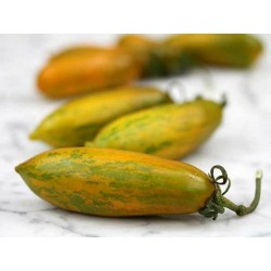 Green Sausage Tomato Seeds
