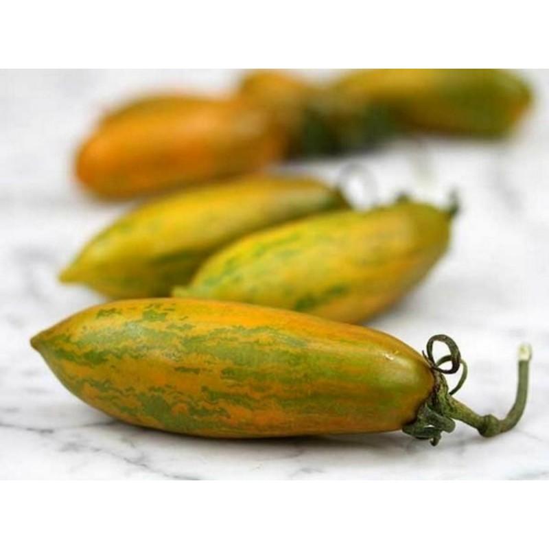 Seme Paradajza Green Sausage