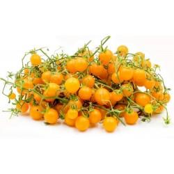 Tomato Yellow Currant Seed (Solanum pimpinellifolium)