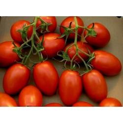 Tomato Seeds ROMA NANO
