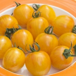 ARTISAN GOLDEN BUMBLE BEE Cherry Tomato Seeds