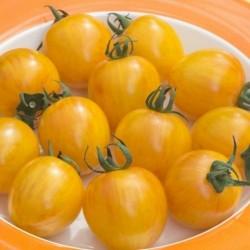 Ντομάτα σπόρος ARTISAN GOLDEN BUMBLE BEE