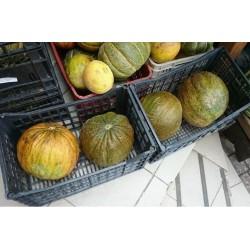 Graines De Melon Turques CASABA