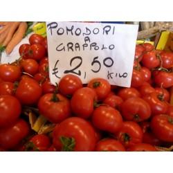 GRAPPOLO Tomatensamen