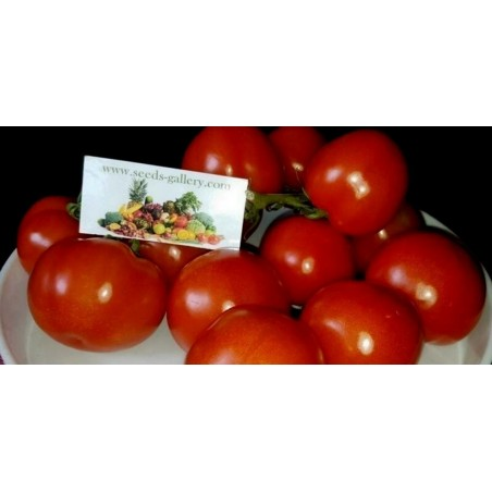 Tomato Seed GRAPPOLO