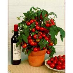 Graines de Tomate Balkonzauber (balcon magique)