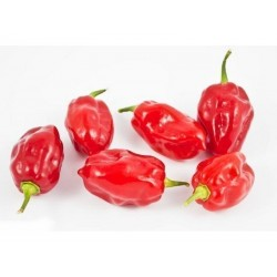 Semi di peperoncino Habanero Tobago Seasoning