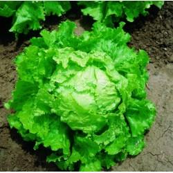 Seme Salate BATAVIA BIONDA DI PARIGI