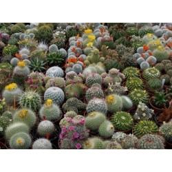 Spisak vrsta kaktusa u Crvenoj listi ugrozenih vrsta