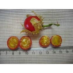Litchi Tomate 1000 samen - Lulita