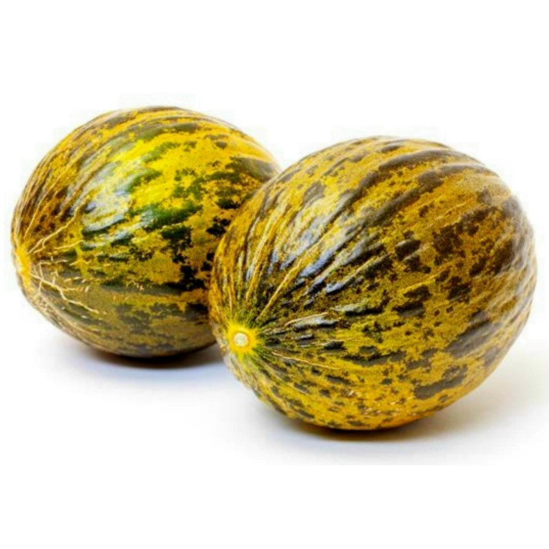 Dalaman Melon Fresh Seeds