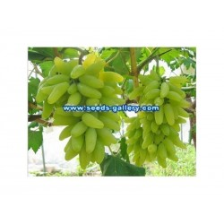 Finger Grape Seeds