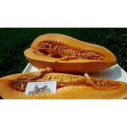 Greek Traditional Giant Melon Kalambaka Seeds