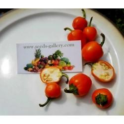 Semi di Peperoncino Arancione ciliegia - Orange Cherry