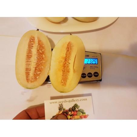 KACHRA Cucumis callosus Samen indische Melone