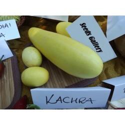 KACHRA Indian melon Frön (Cucumis callosus)