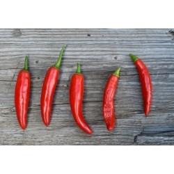 ONZA Hot Chilli Pepper Seeds