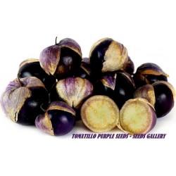 Tomatillo Seeds Physalis philadelphica Purple