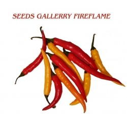FIREFLAME Τσίλι – πιπέρι σπόροι