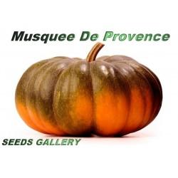 Semi di zucca MUSQUÈE DE PROVENCE