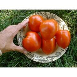 Semillas De Tomate Amish Paste
