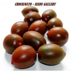 Seme Paradajza Chockmato