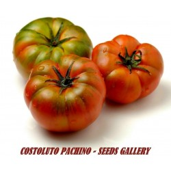 Semillas de tomate sic. Costoluto Pachino - Heirloom