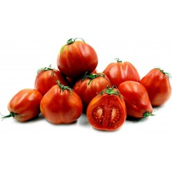Semillas de tomate RED PEAR PIRIFORM