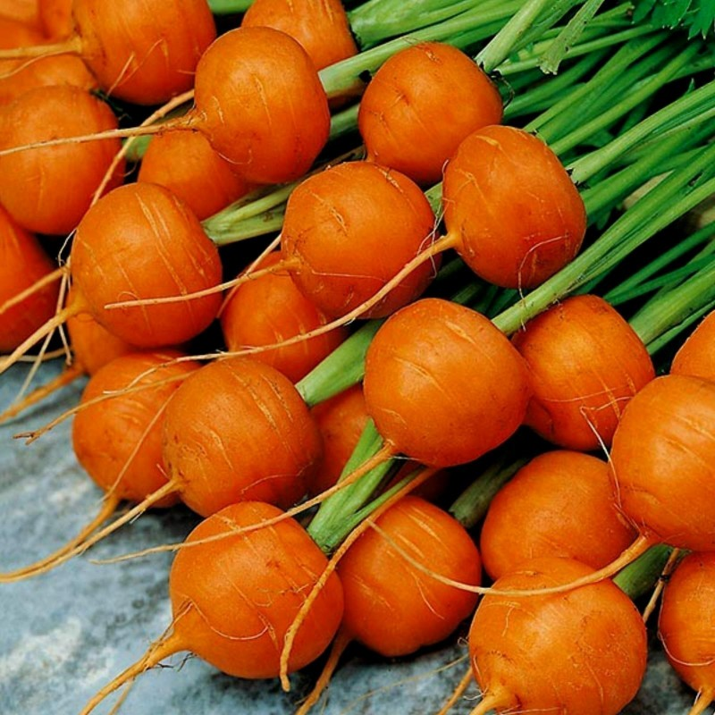 """Carrot Seeds """"Parisian - Paris Market"""""""