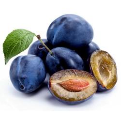 Srpska Domaca Sljiva Seme (Prunus domestica)
