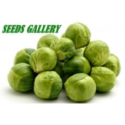 "Prokelj - Kelj pupcar Seme ""Long Island Herkules"" (Brassica oleracia)"