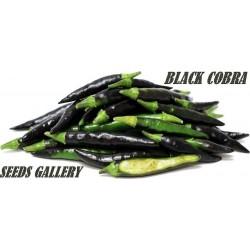 Black Cobra Chili frö (C. annuum)