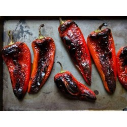 Sweet Paprika - Pepper Seeds Amphora