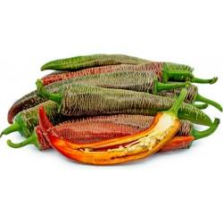 """Vezanka"" chile 500 Semillas antigua variedad de Serbia"